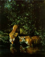 ReflectionsoftheJungle